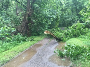 There were a few downed trees. This one and I particularly did not get along well.