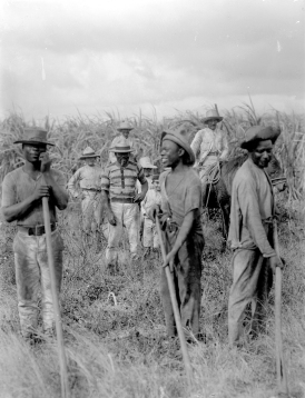 BarbadosPlantation.jpg